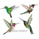Stickers pour Fenêtre 4 Superbes Stickers Electrostatiques Décoratifs au Motif Colibri – Permet d'éviter Que Les Oiseaux Ne Se Cognent dans Vos Fenêtres